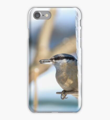 Nuthatch bird or wood nuthatch iPhone Case/Skin