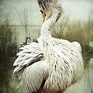 Preening Pelican by Lissywitch
