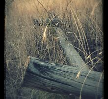 Fence by Gracem Photography
