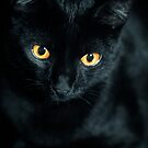 Black Cat by Keith G. Hawley