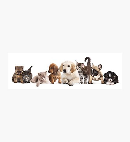 Cute Pet Panorama Photographic Print