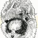 Pomeranian Father & Son by BarbBarcikKeith