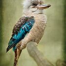 Kookaburra by Lissywitch