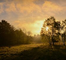 The Morning by J. Danion