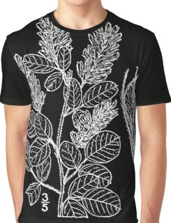 Britton And Brown Illustrated flora of the northern states and Canada 0914 Lespedeza hirta BB 1913 Graphic T-Shirt
