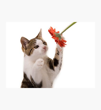Kitten playing Photographic Print