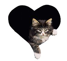 Kitten Heart Photographic Print