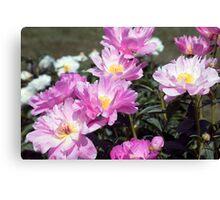 Longwood Gardens - Spring Series 181 Canvas Print