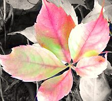 Autumn Leaf by sammiejayjay