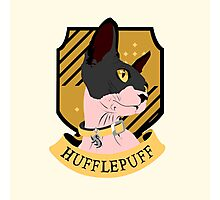 Hufflepuff Sphynx Photographic Print