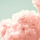 Soft Cherry Blossoms by Caroline Mint