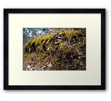 Moss macro Framed Print