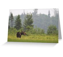 Grassy marsh moose - Algonquin Park, Canada Greeting Card