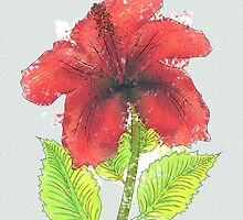 Watercolor red hibiscus 2 by AnnArtshock