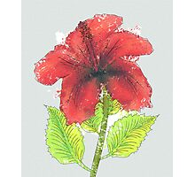 Watercolor red hibiscus 2 Photographic Print
