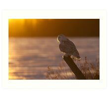 Sunset Hunter - Snowy Owl Art Print