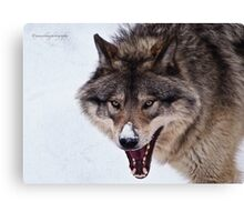 Snarling Wolf Canvas Print