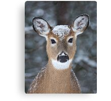 New Winter hat - White-tailed deer Canvas Print