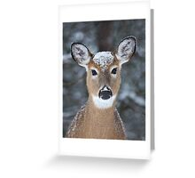 New Winter hat - White-tailed deer Greeting Card