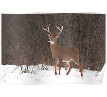 Bambi - White-tailed Buck Poster