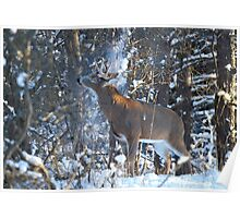 Snow Shower - White-tailed Buck Poster