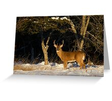 A Winters Sunset - White-tailed deer Buck Greeting Card