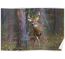Who goes there? - White-tailed Buck Poster