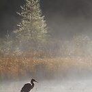 Morning Solitude - Algonquin Park, Canada by Jim Cumming