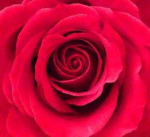 Romance by sammiejayjay