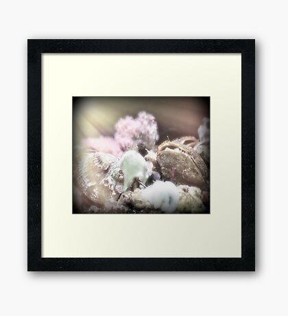 Jewels On The Ocean Floor Framed Print