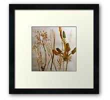 Mornington Peninsula Grasslands 2 Framed Print