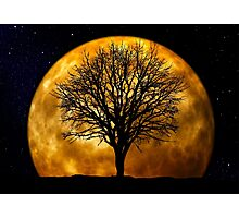 Tree and Moon  Photographic Print