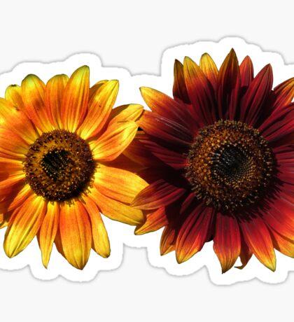 Yellow and Red Sunflowers Sticker  Sticker