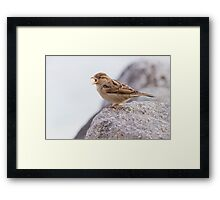 bird at lake Framed Print