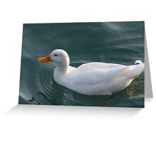 ducks on lake Greeting Card