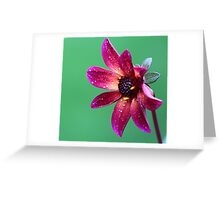 A red flower Greeting Card