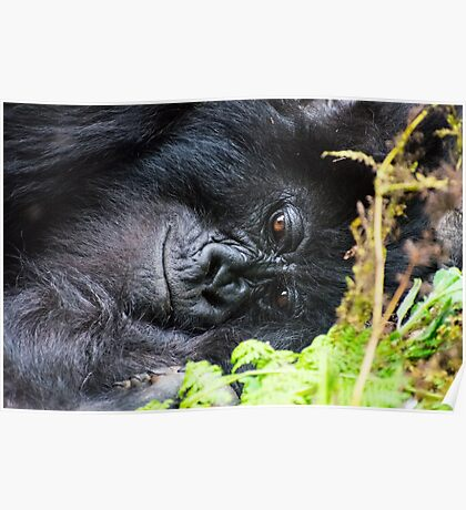 Smiling Gorilla Mother Poster