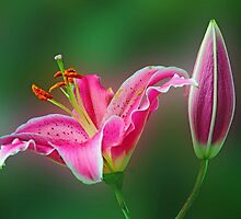 Tiger lily by Dipali S
