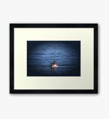 Boppin Along a baby sea lion basks on a buoy Seal Pup Framed Print