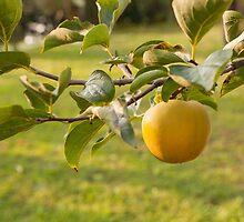 apple on tree by spetenfia