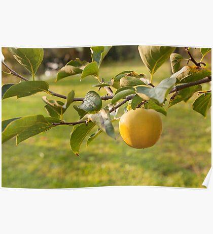 apple on tree Poster