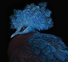 blue crowned pigeon by Jo-PinX