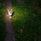 Cat wailing on garden path at night by turniptowers