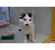 Half - Moustache Max the Cat Photographic Print
