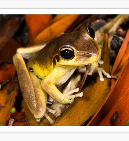 Stoney Creek Frog Sticker