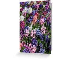 Hyacinths Greeting Card