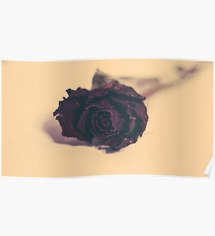 Dried Rose  Poster
