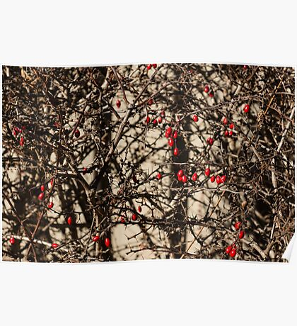 Thorny Patterns - Jewel Toned Berries by the Fence Poster