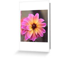 Pink orange flower Greeting Card