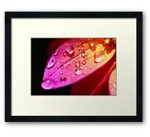A wet petal Framed Print